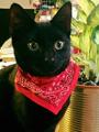 Pax Cat